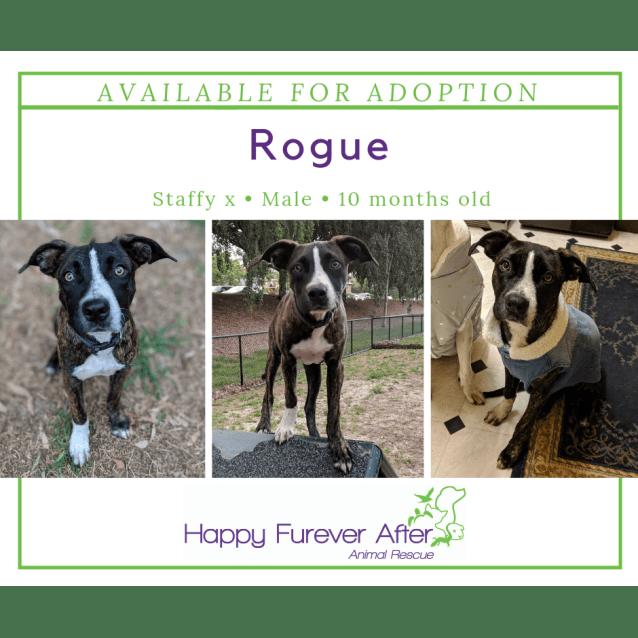 Photo of Rogue