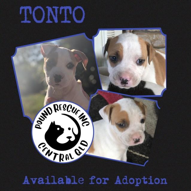 Photo of Tonto