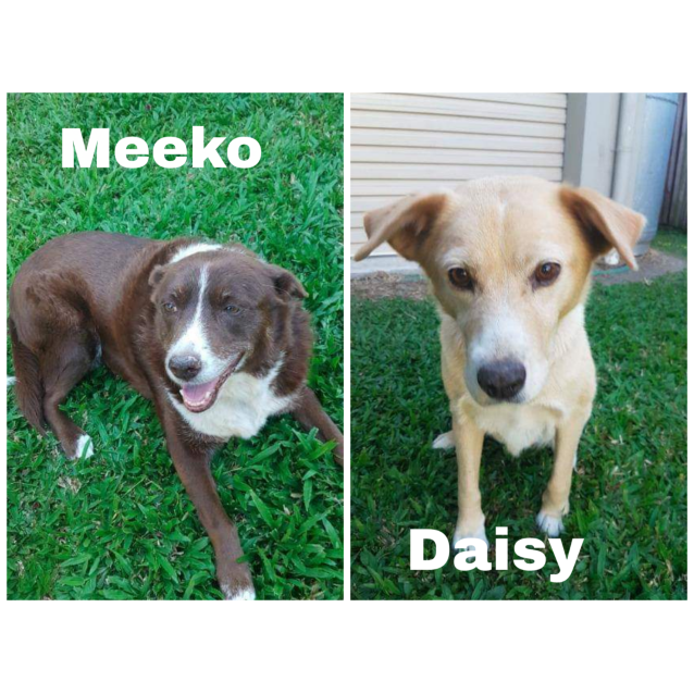 Photo of Meeko And Daisy