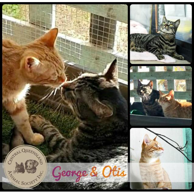 Photo of George & Otis