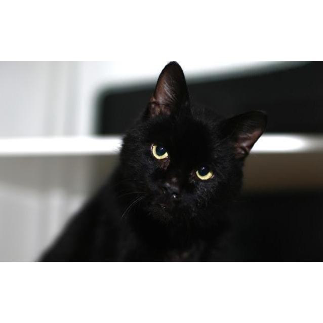 Photo of Bob    Meet Me In Cat Lounge/Neko Hq Preston