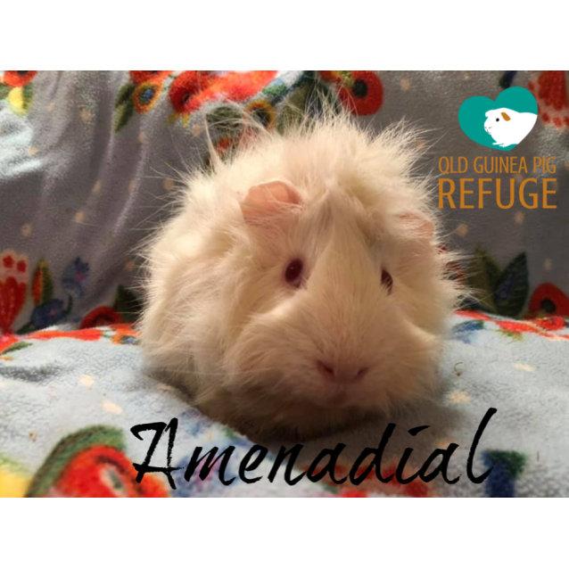 Photo of Amenadial