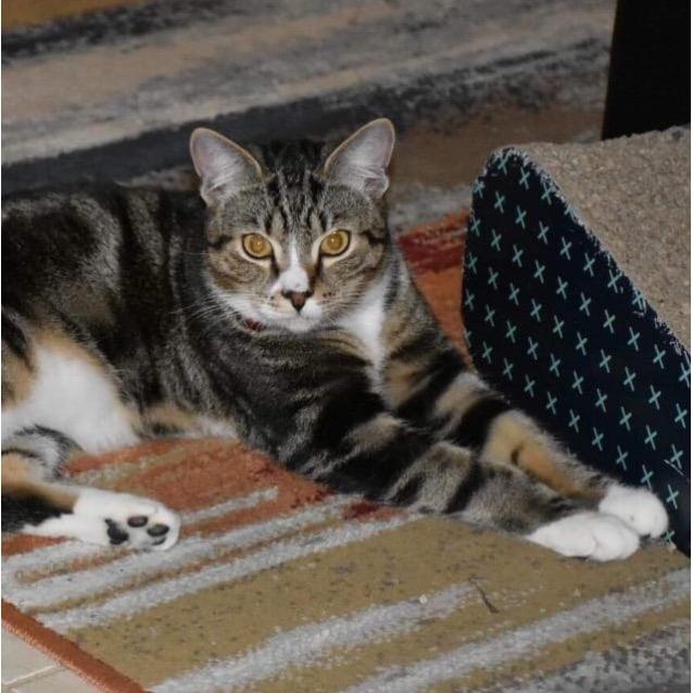 Photo of Apollo