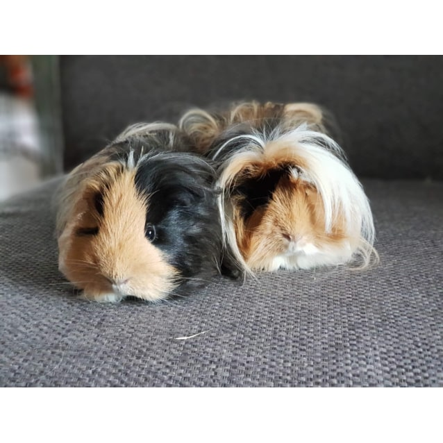 Photo of Pig And Zulu