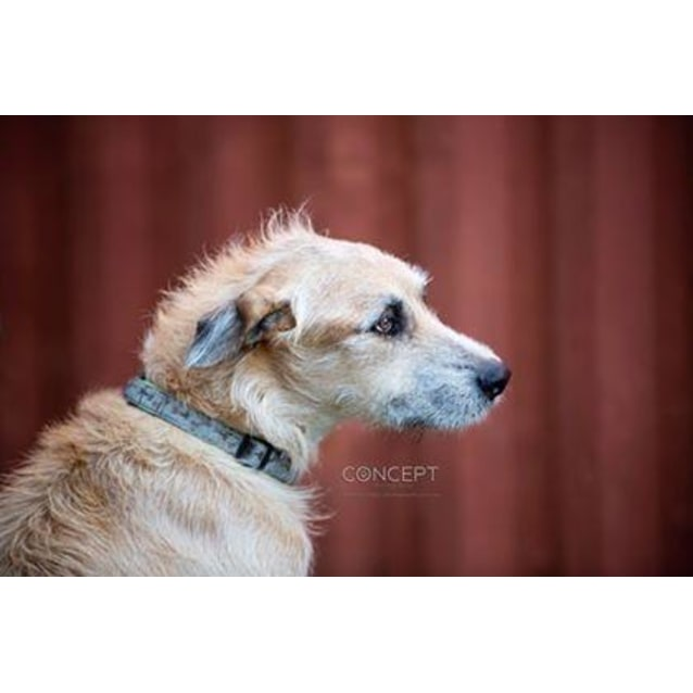 Photo of Shaggy