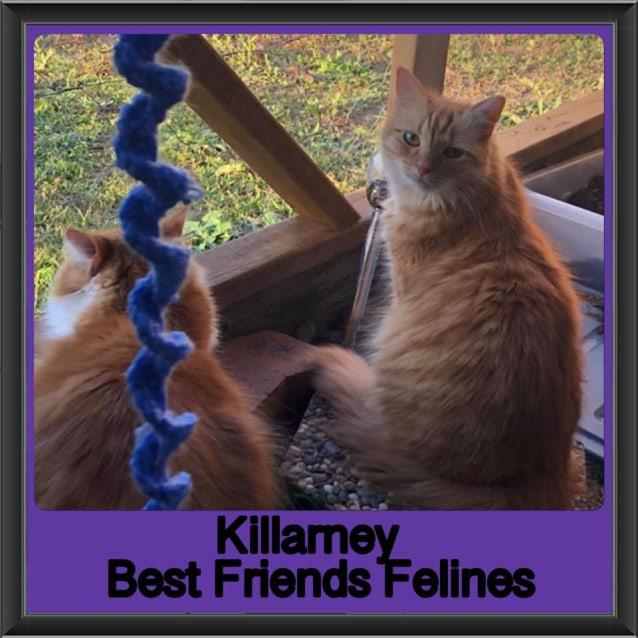 Photo of Killarney
