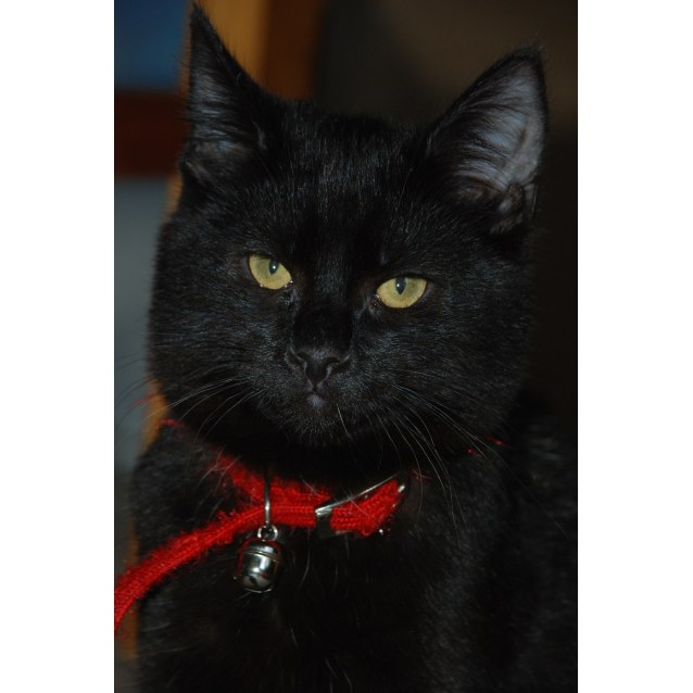 Photo of Tennyson~Best Friend For Life