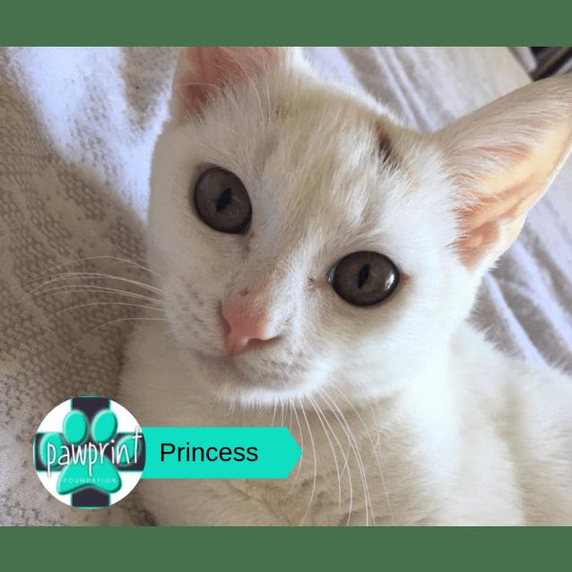 Photo of Princess