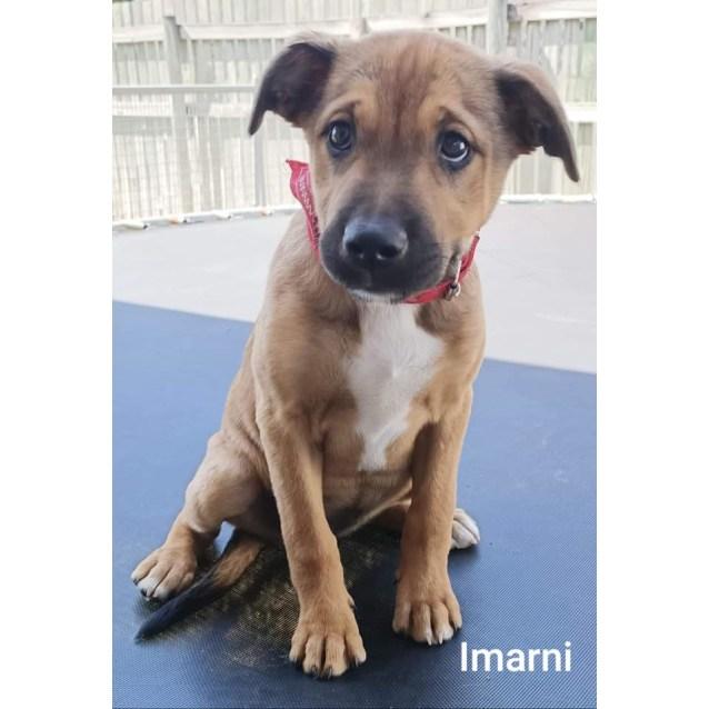 Photo of Imarni