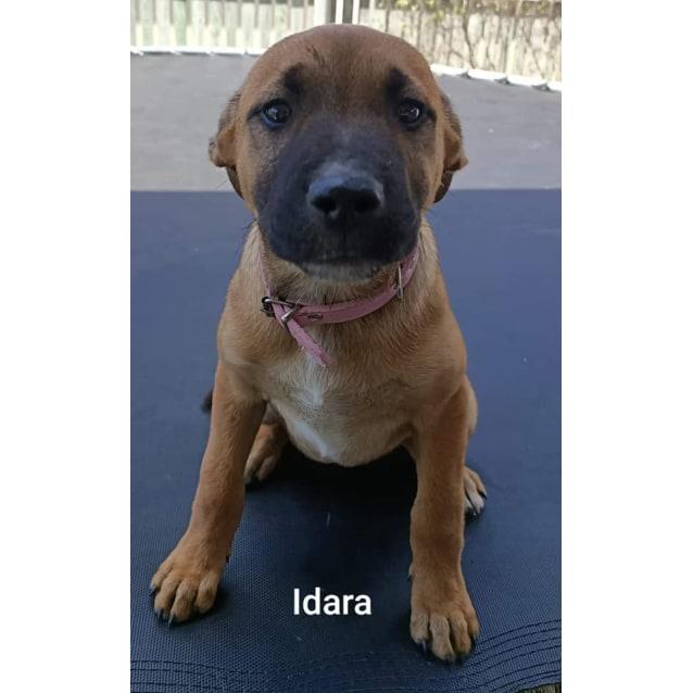 Photo of Idara