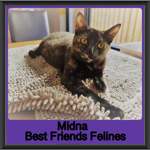 Photo of Midna