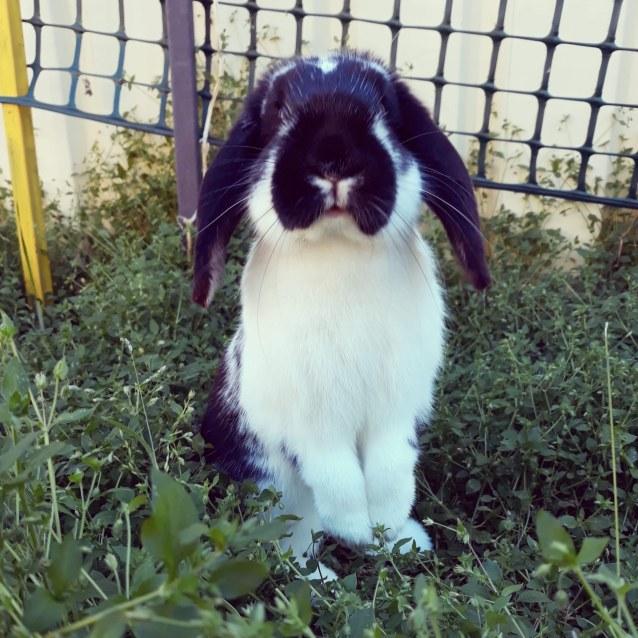 Photo of Oreo 🐰