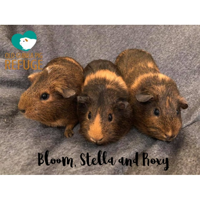 Photo of Bloom, Stella And Roxy