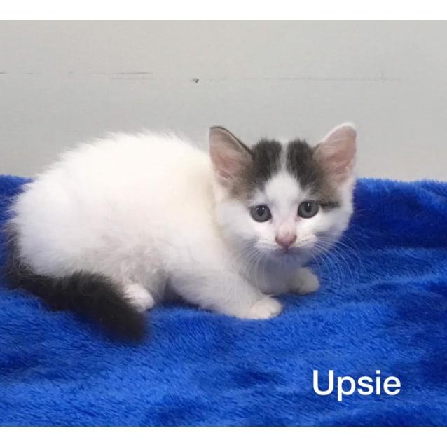 Photo of Upsie