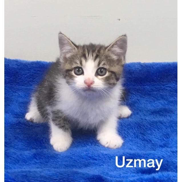 Photo of Uzmay