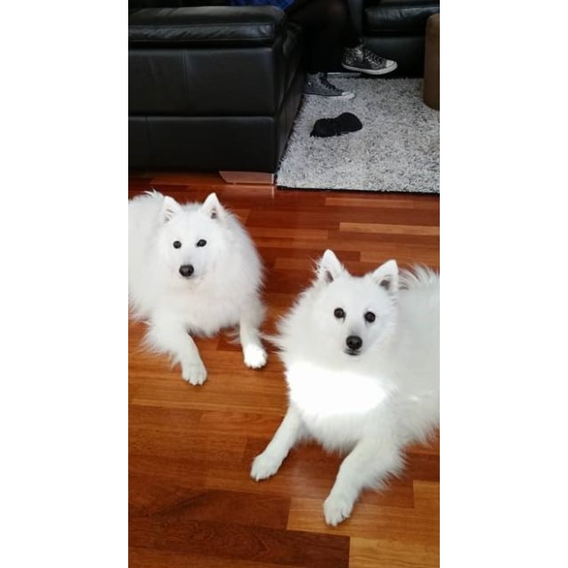 Photo of Yuki And Ghost