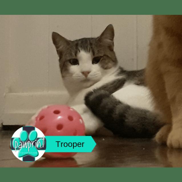 Photo of Trooper