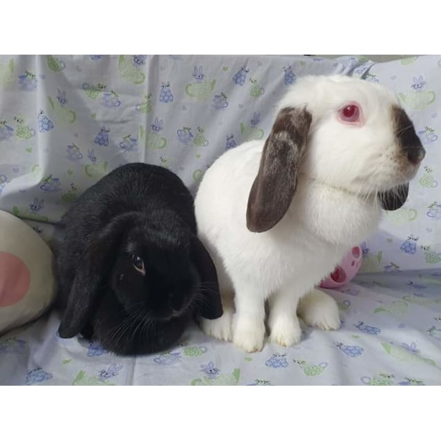 Photo of Flop And Fluff