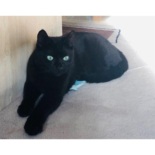 Photo of Ingham / Panther
