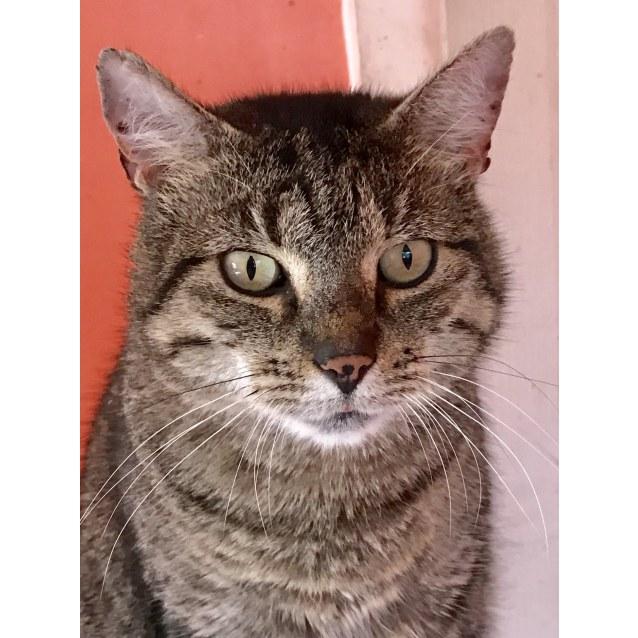 Photo of Desmond