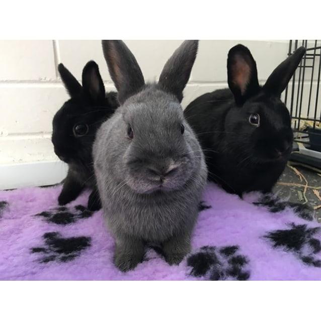 Photo of Blossom, Bluebell & Poppy