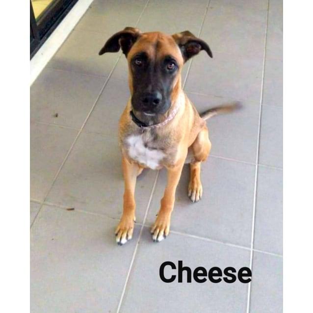 Photo of Cheese