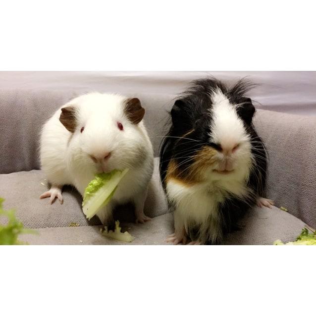 Photo of Zebedee & Willoughby