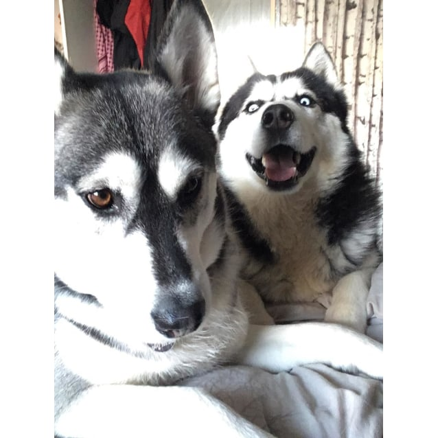 Photo of Rocky & Mika