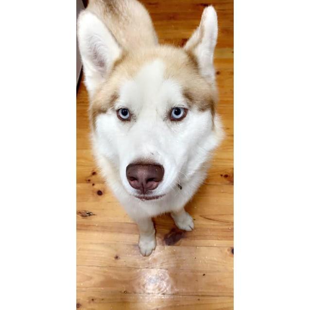 Photo of Odin