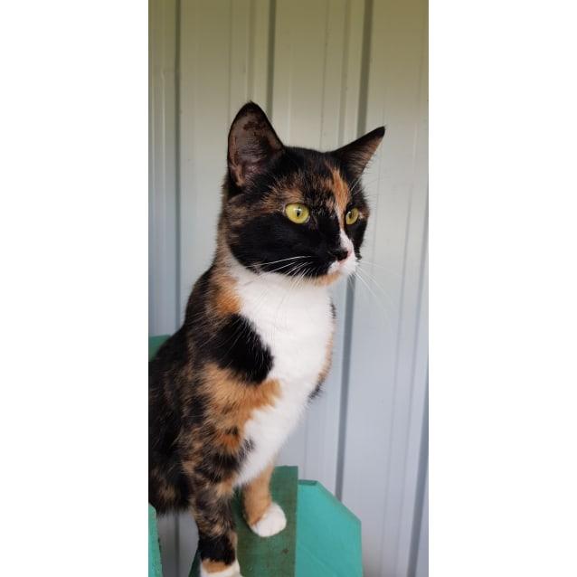 Photo of Whiskie