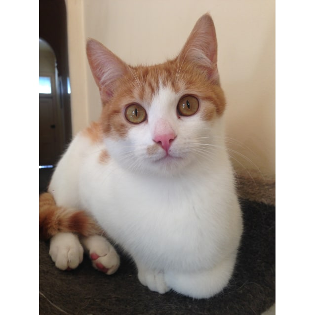 Photo of Kimi (Located In Yarraville)