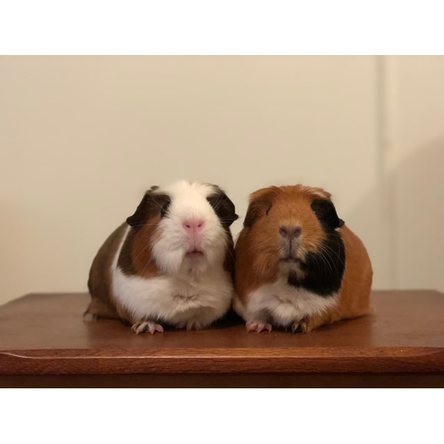 Photo of Dotty And Spotty