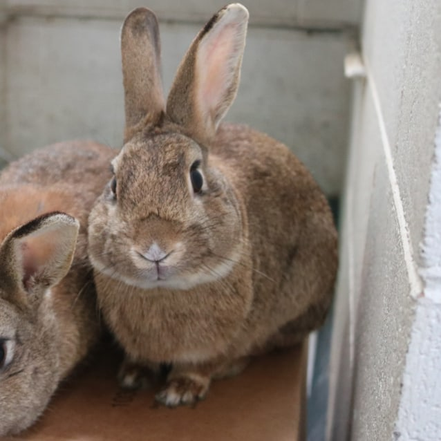 Photo of Thumper 925208