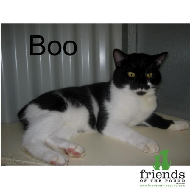 Photo of Boo