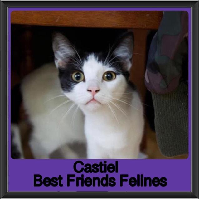 Photo of Castiel