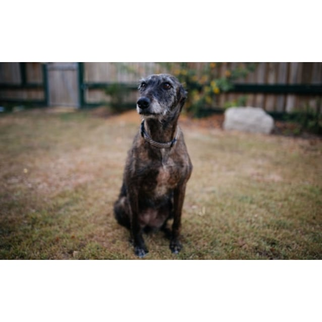 Photo of Lully