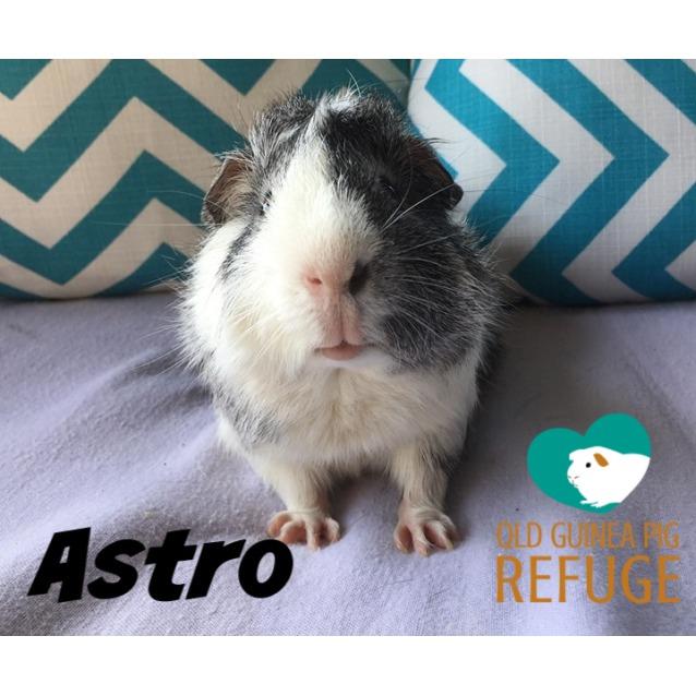 Photo of Astro