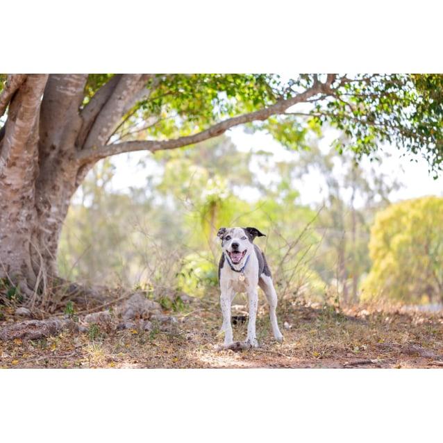Photo of Buddy 🐶
