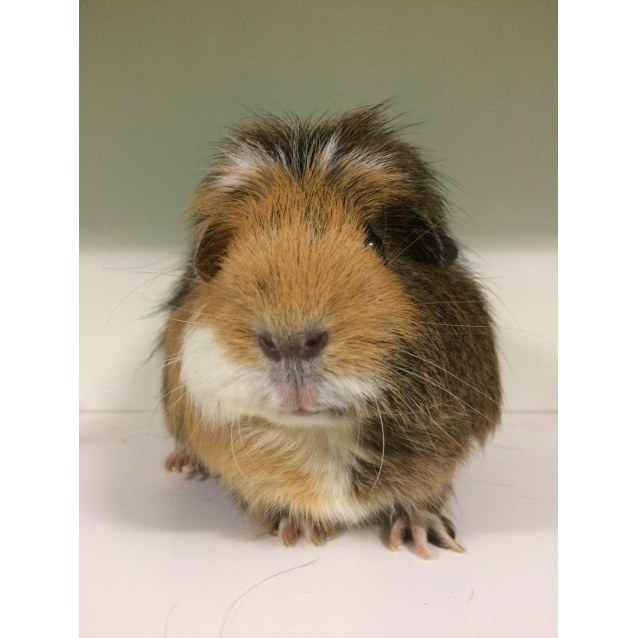 Photo of Mumma Pig