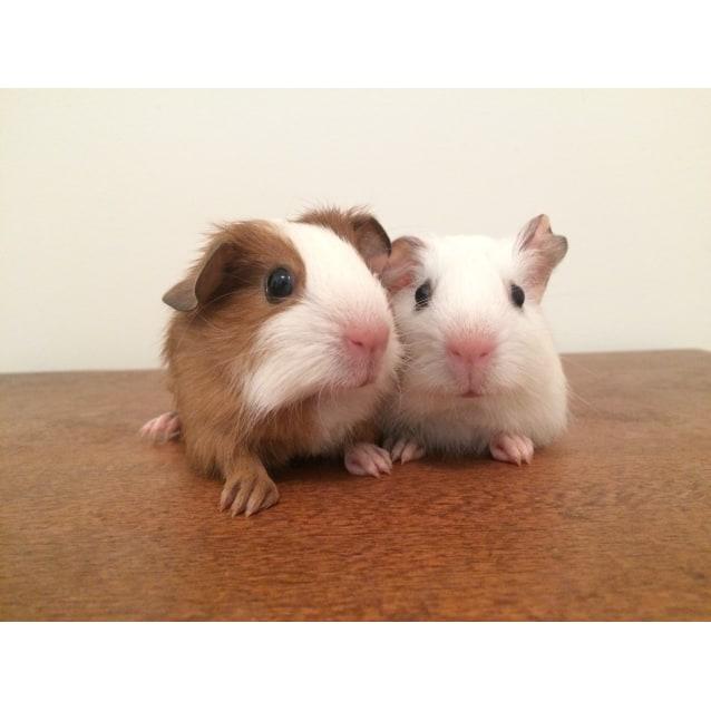 Photo of Oatly & Peanut