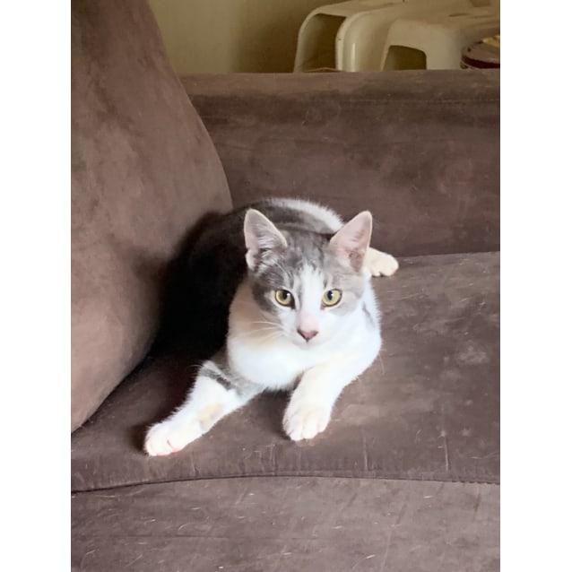 Photo of Sawni