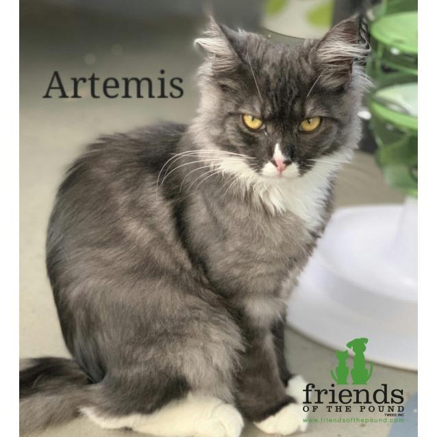 Photo of Artemis