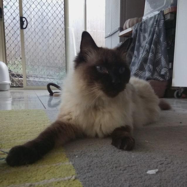 Photo of C582 Simba
