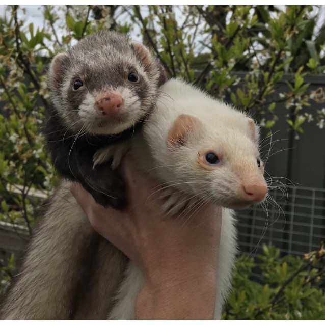 Photo of Yoshi & Ruby