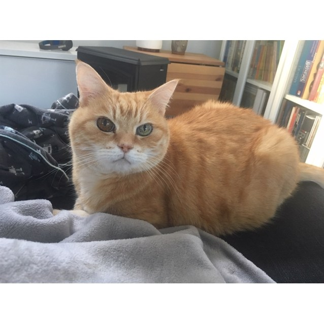 Photo of Gingy