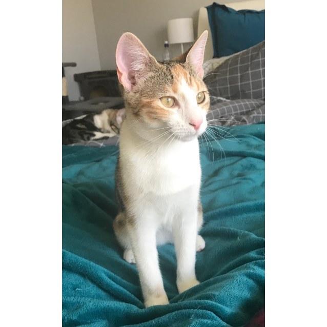 Photo of Cosette (Cosi)