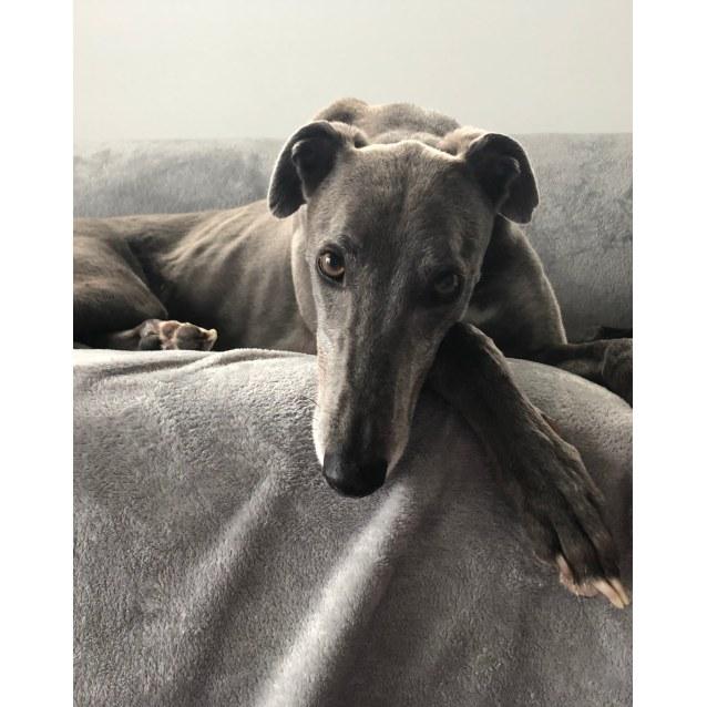 Photo of Dusty