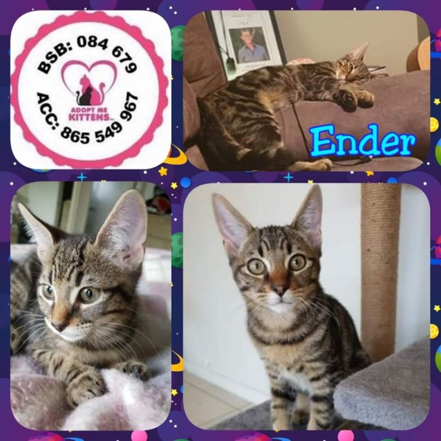 Photo of Ender
