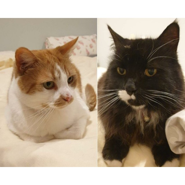 Photo of Purrcy And Snookums... All Expenses Paid!