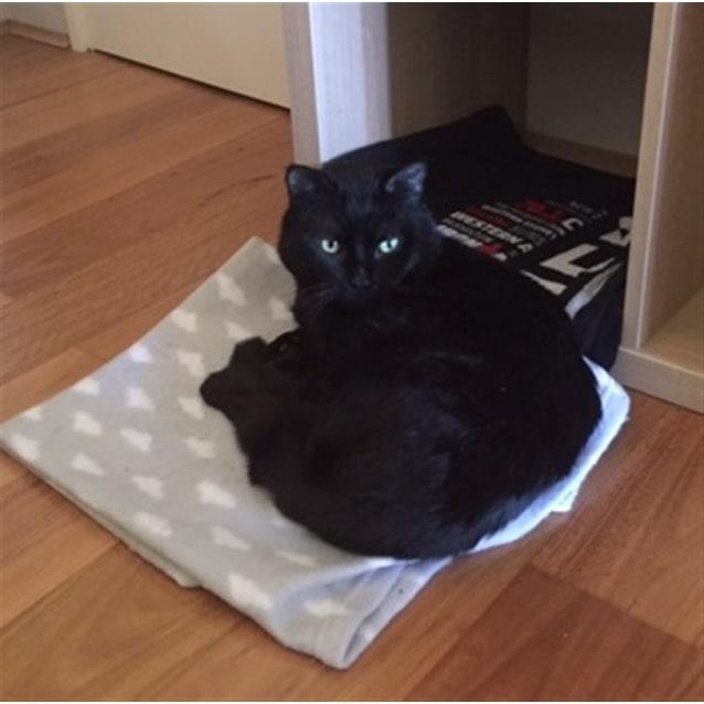 Photo of Humphrey